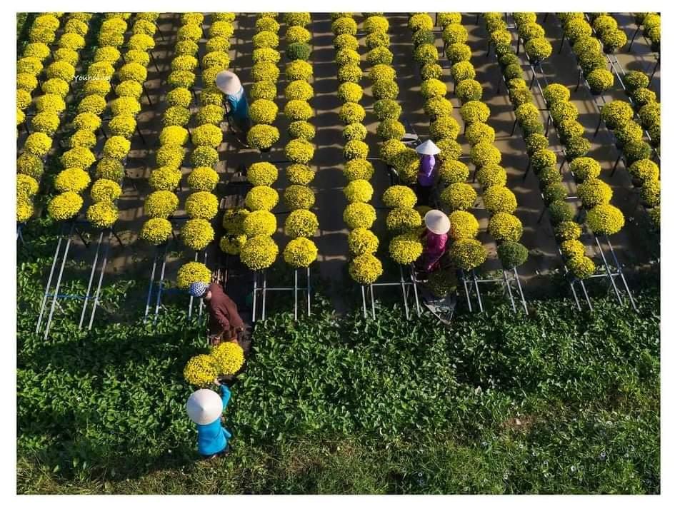 Sáng tác hoa Tết làng hoa Sa Đéc năm 2021